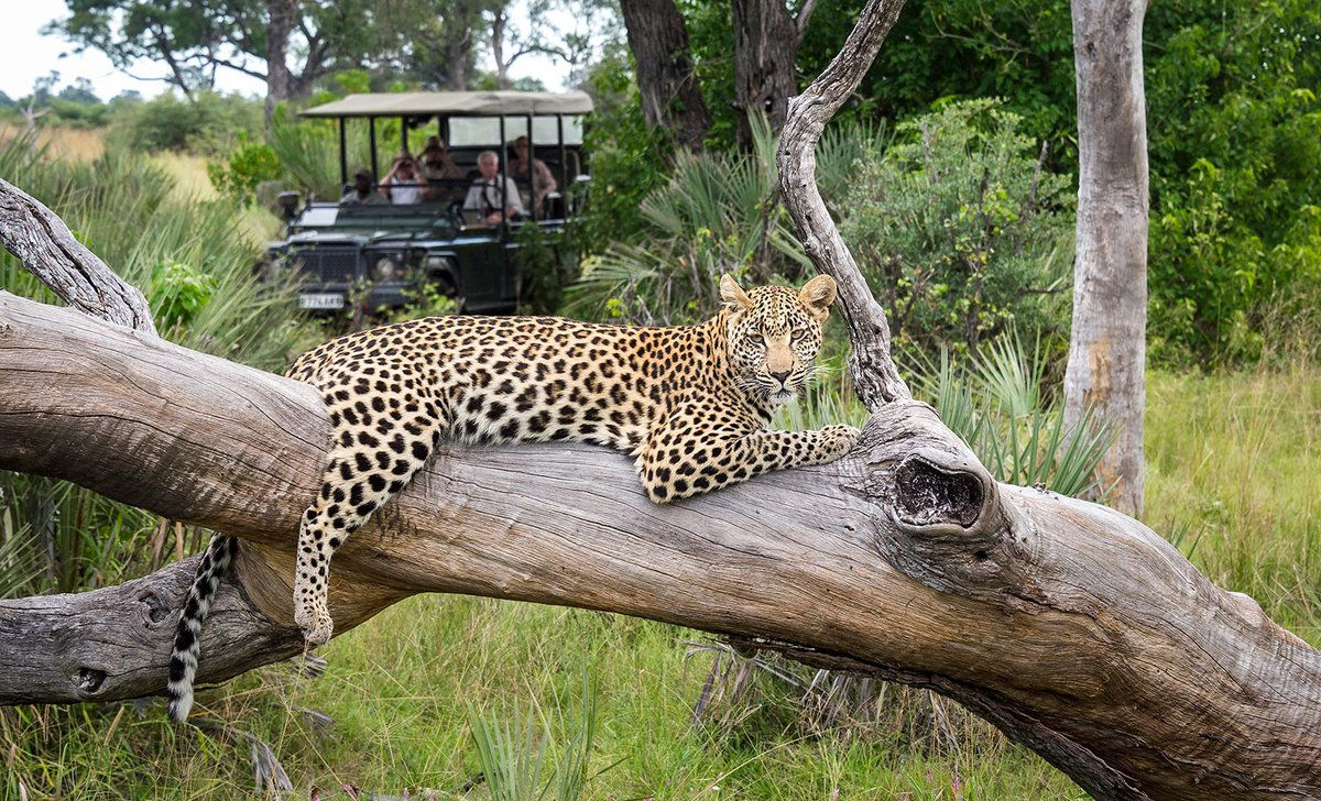 leopard-game-drive-seba-camp-67545.jpg