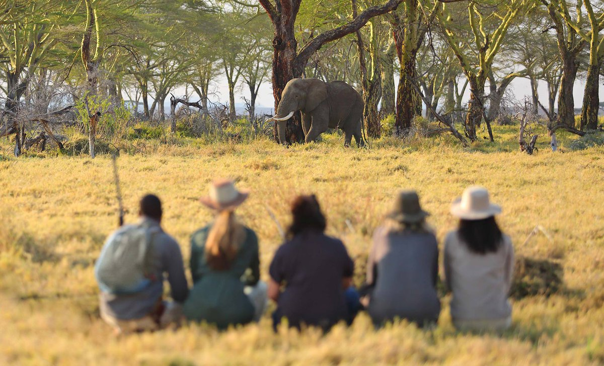 Travel Well Elephant-walking-safari-Kimondo-Migration-Camp-Tanzania