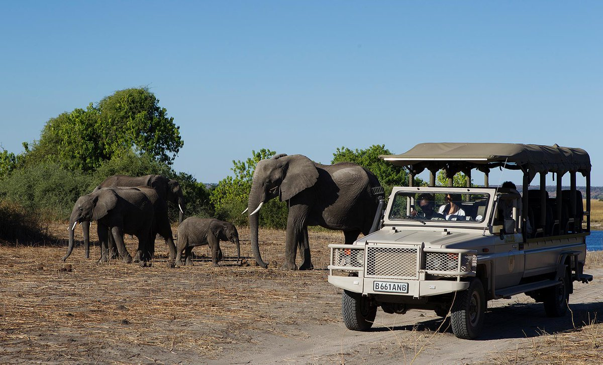 Game drive near elephant herd from Chobe Game Lodge, Botswana