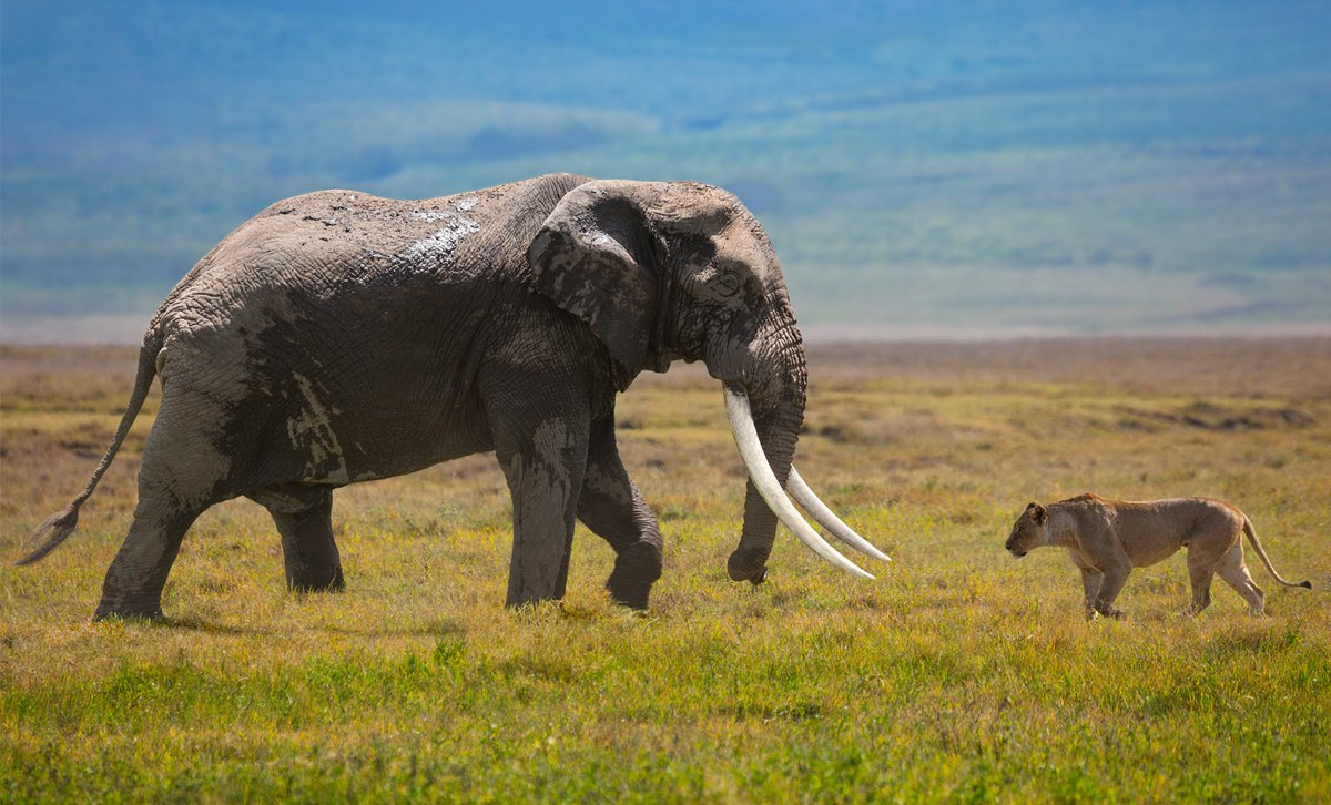 Sensory Safaris: Experience the Living Landscapes of Tanzania