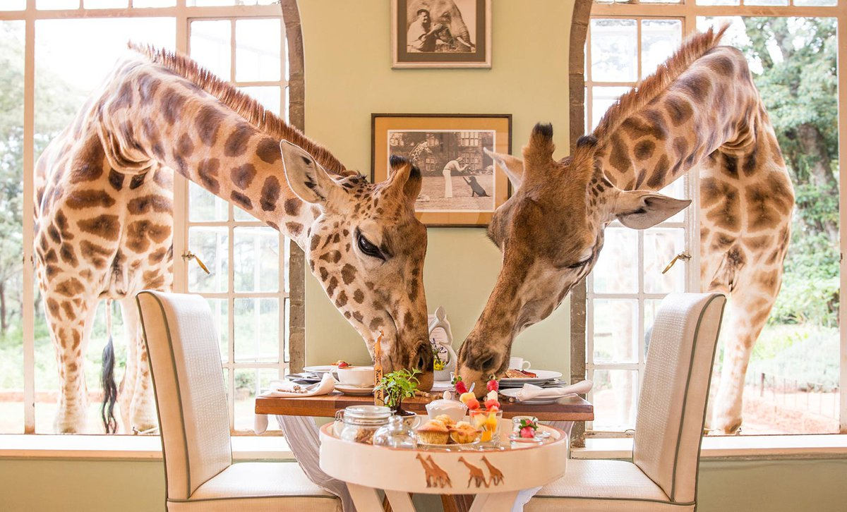Celebrating the Giraffe