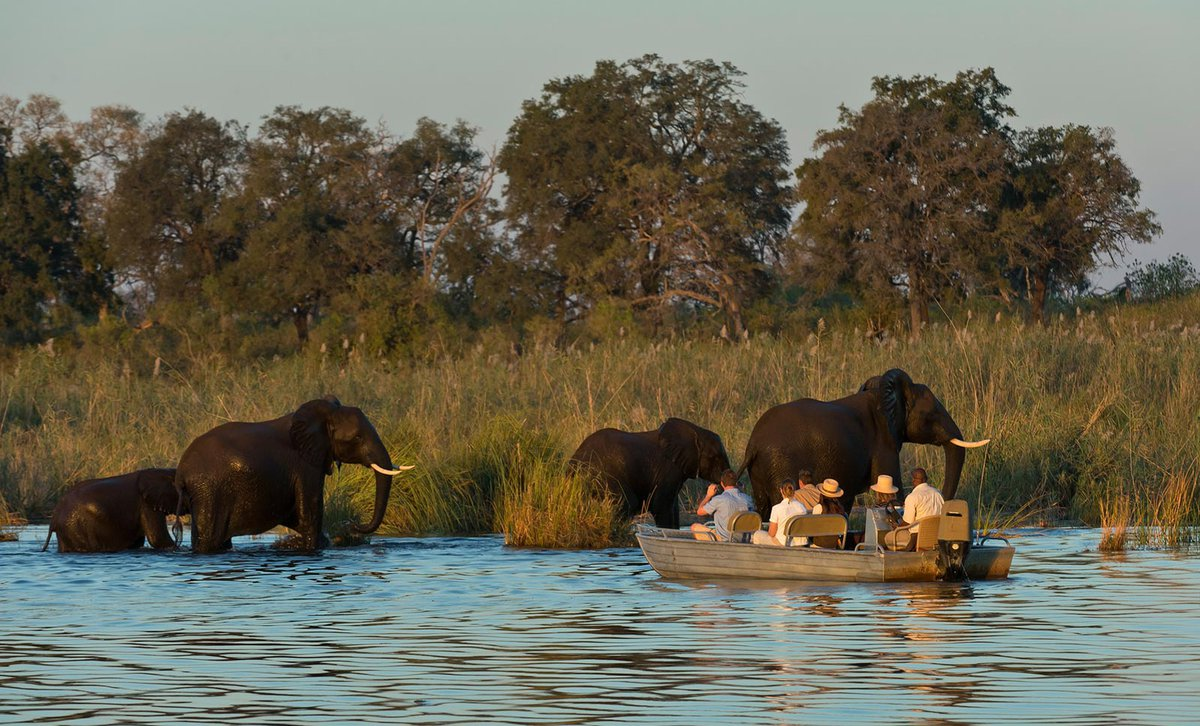 Guests boating near elephants Duma Tau Botswana
