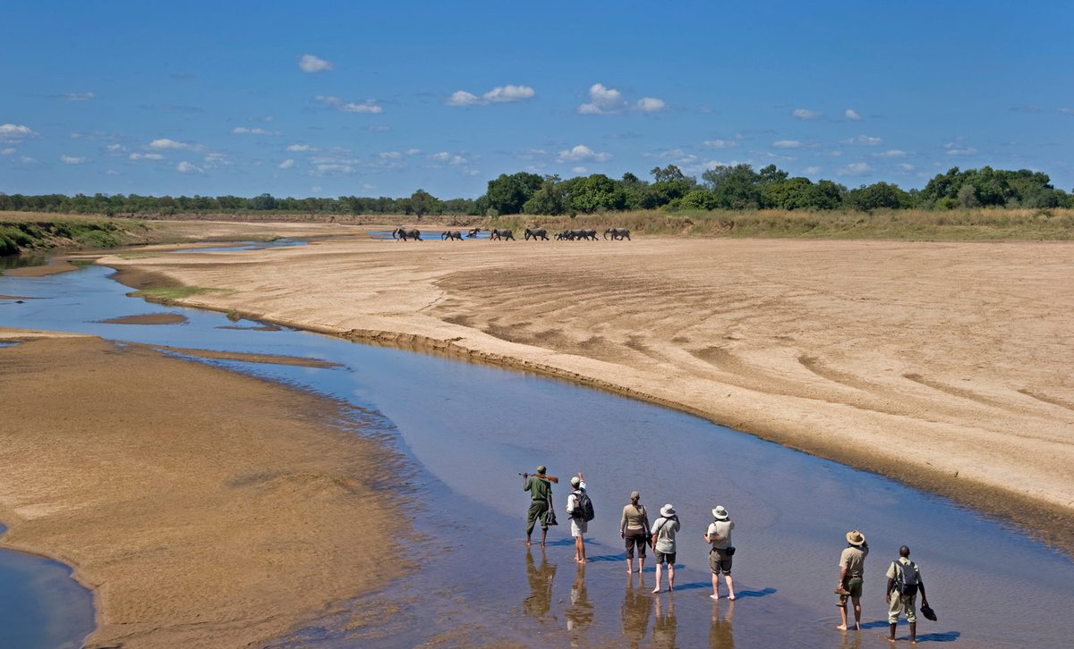 Sanctuary-Zebra-Plains-Camp-walking-safari-elephants-South-luangwa
