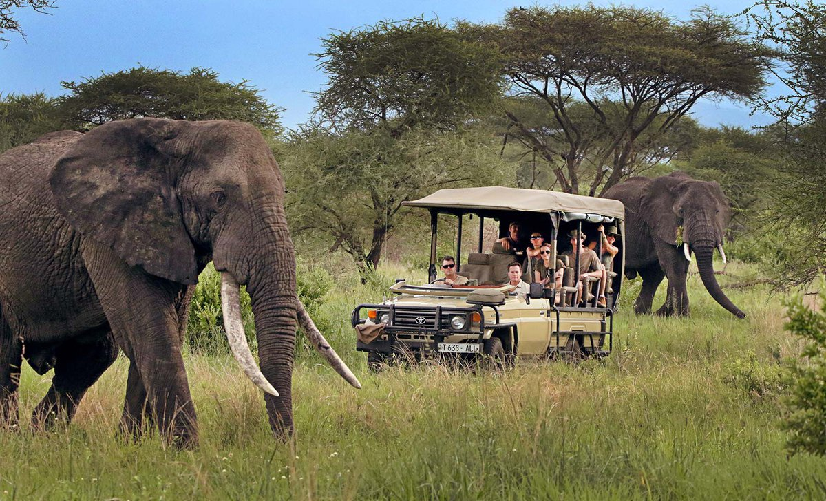 family game drive with 2 large elephants