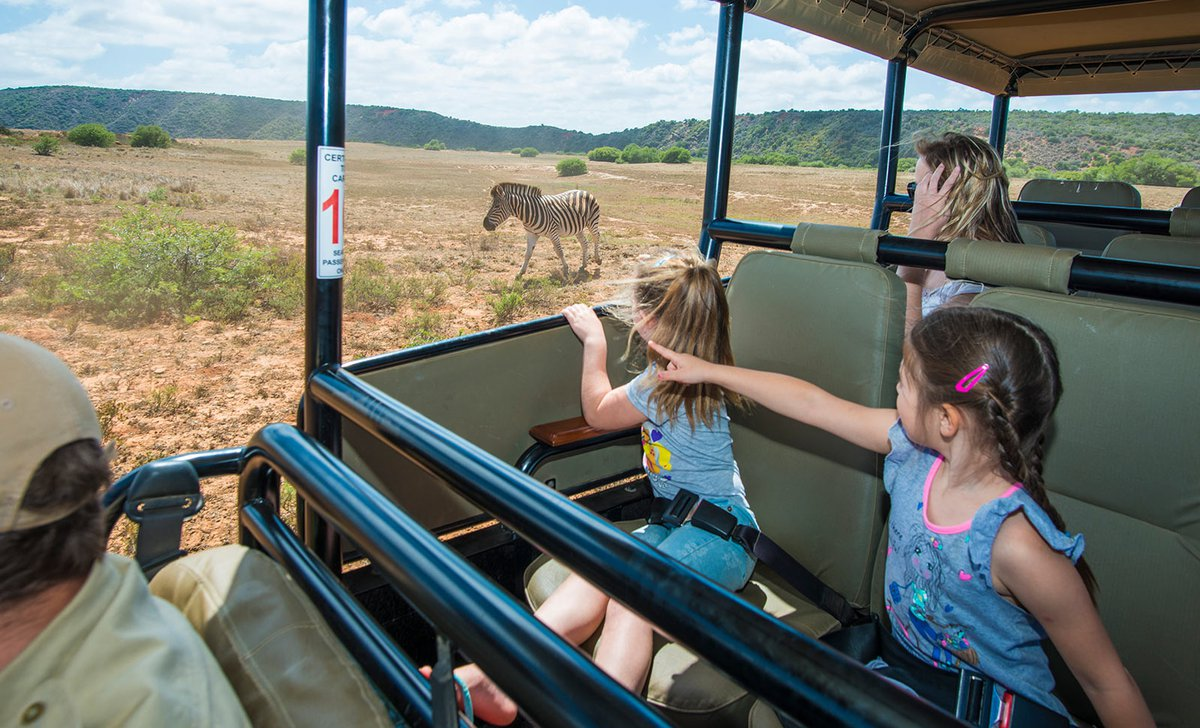 Kids watching zebra on family friendly game drive