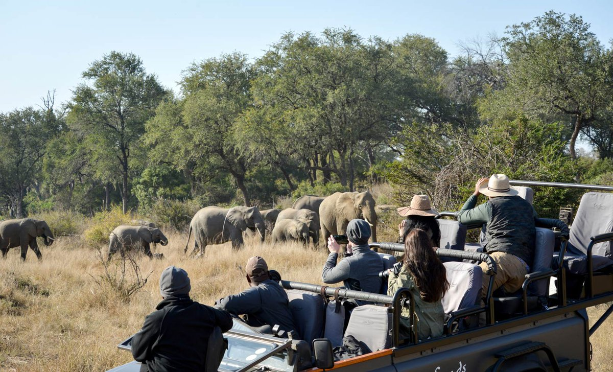 elephant herd on game drive lion sands south africa