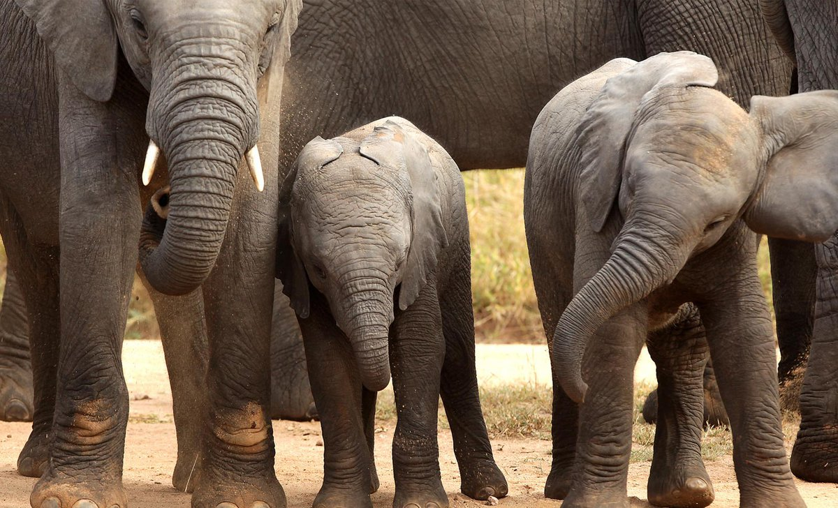 elephant babies phinda private reserve south africa