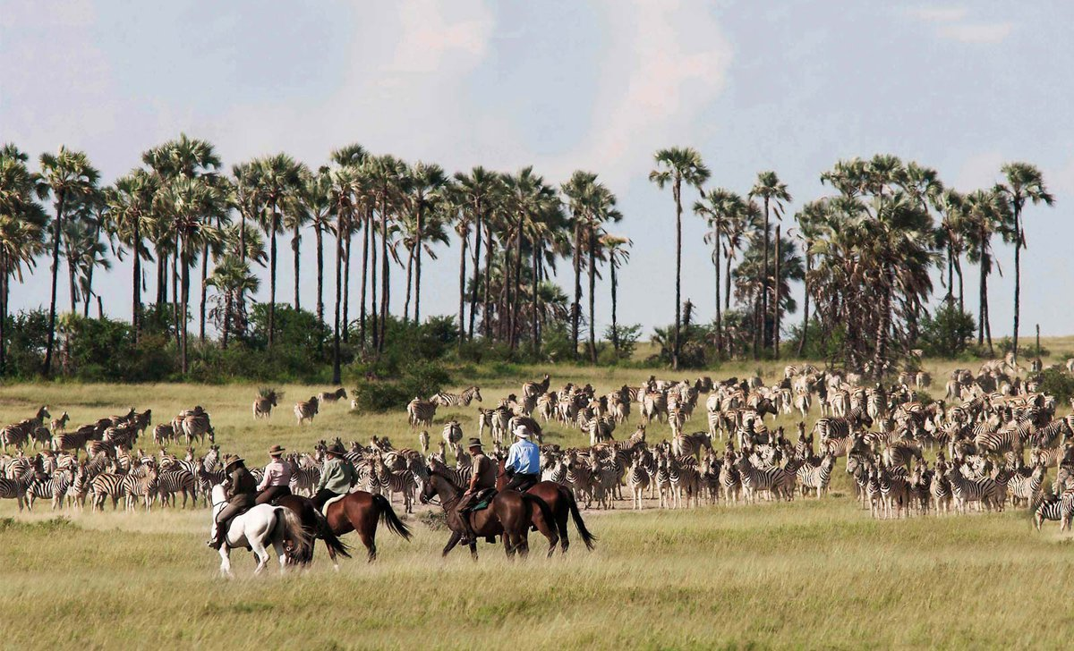 relation-horse-riding-safari-zebra-herd-jack's-camp