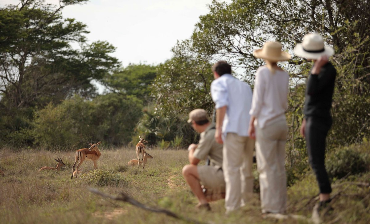impala-guided-bush-walk-safari-phinda-private-game-reserve-south-africa