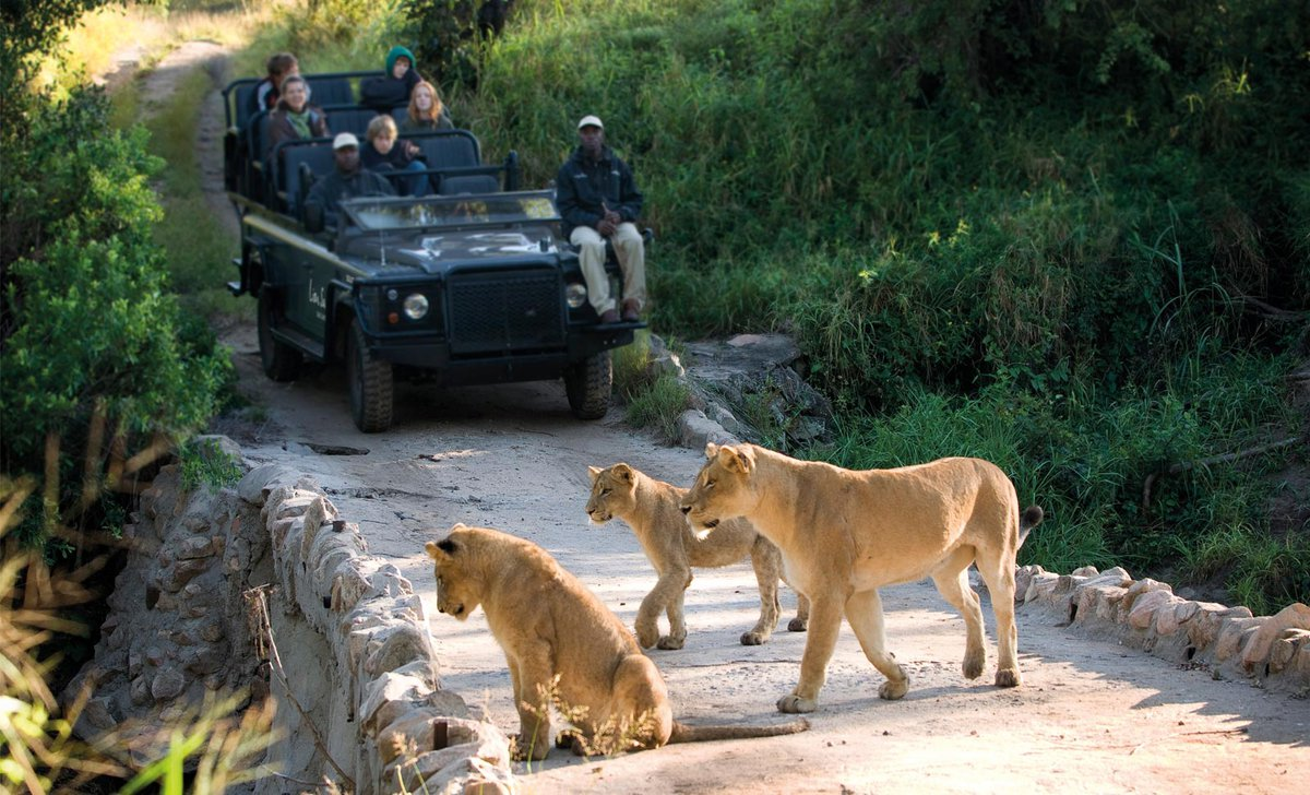 lioness-with-cubs-game-drive-lion-sands-south-africa
