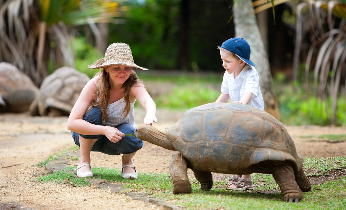 Mother and son looking at Aldabra tortoise seychelles