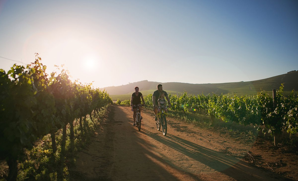 cycling-through-winelands-istock-880852054-by-nattrass-24177.jpg
