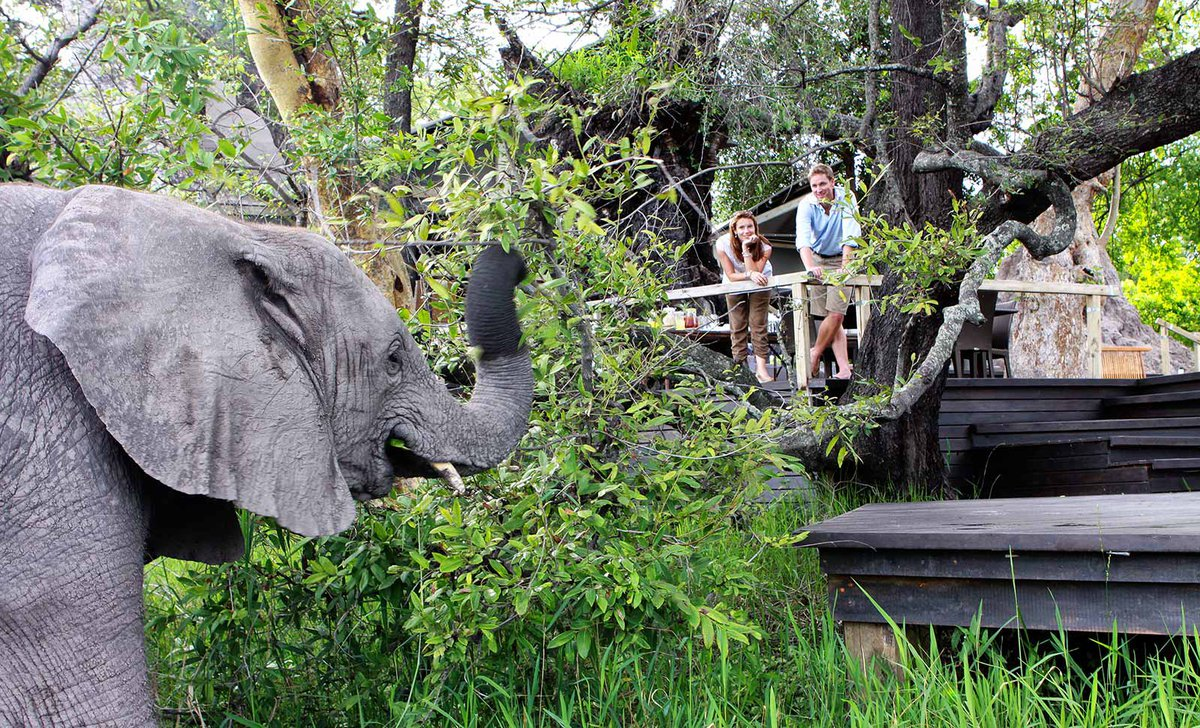Couple watching elephant from platform at Abu Camp