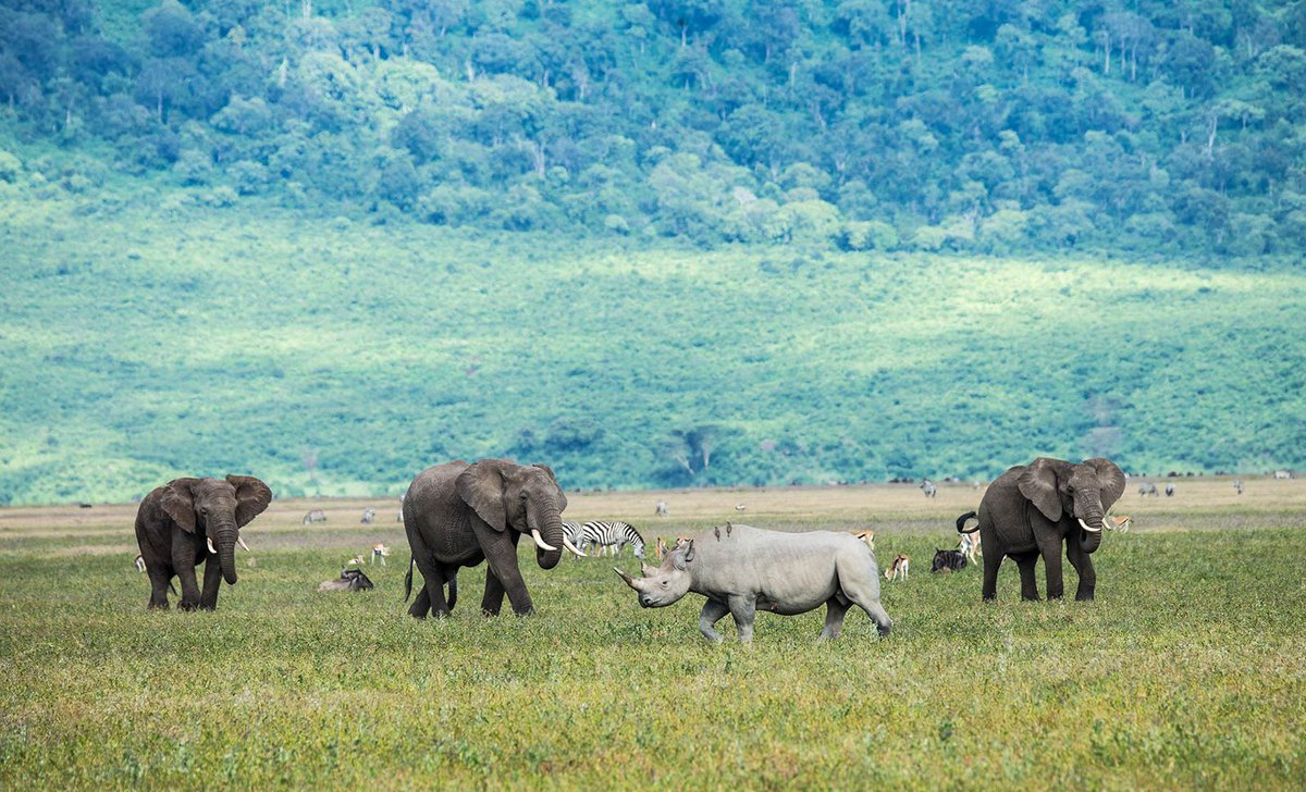 Elephants and rhino in the Ngorongoro Crater