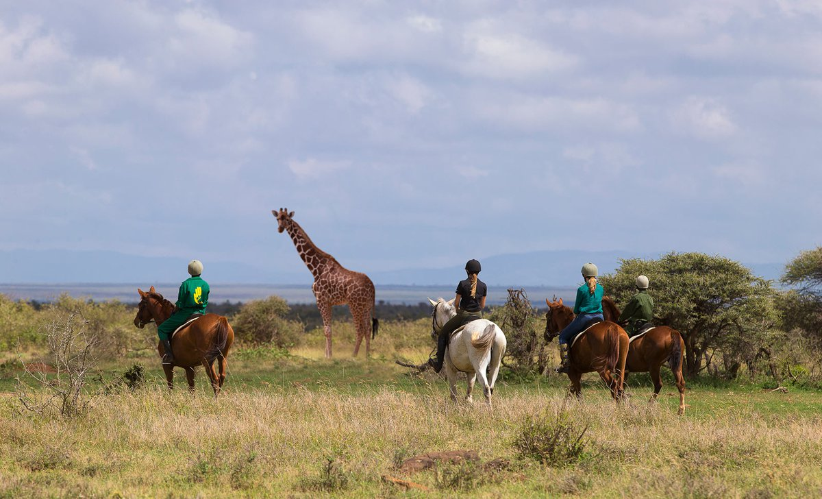 Family horseback safari near giraffe Loisaba Conservancy Kenya