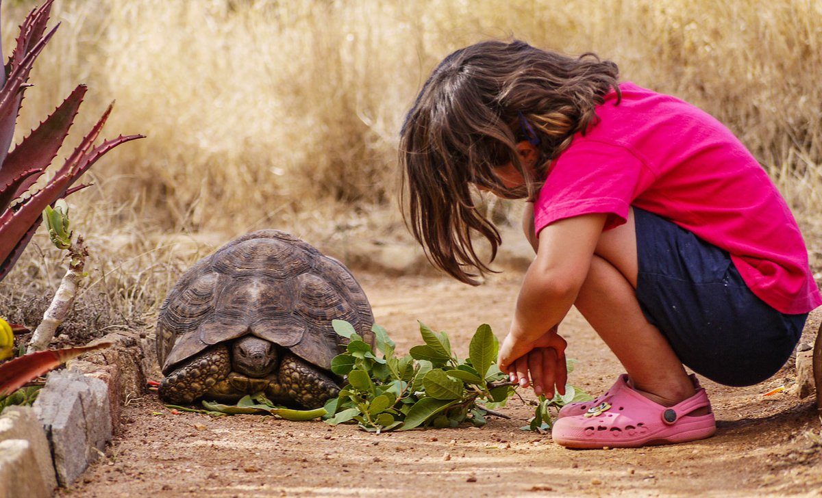 Girl feeding tortoise at Laikipia Wilderness Camp