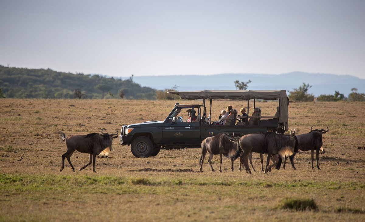 Game drive with kids near wildebeest