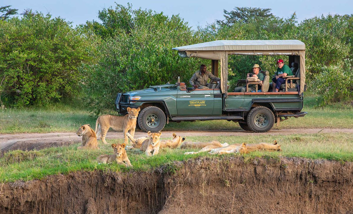 Game drive with teenager near lions