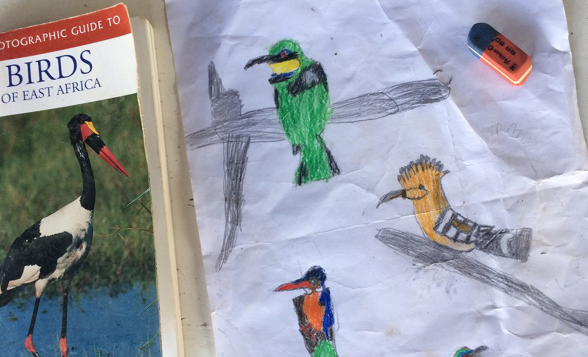 Kids bird drawing on safari