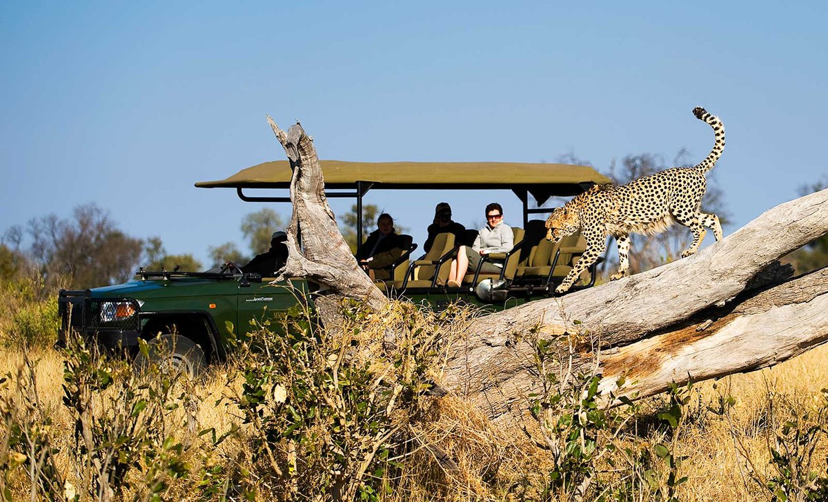 spotting a cheetah on a game drive