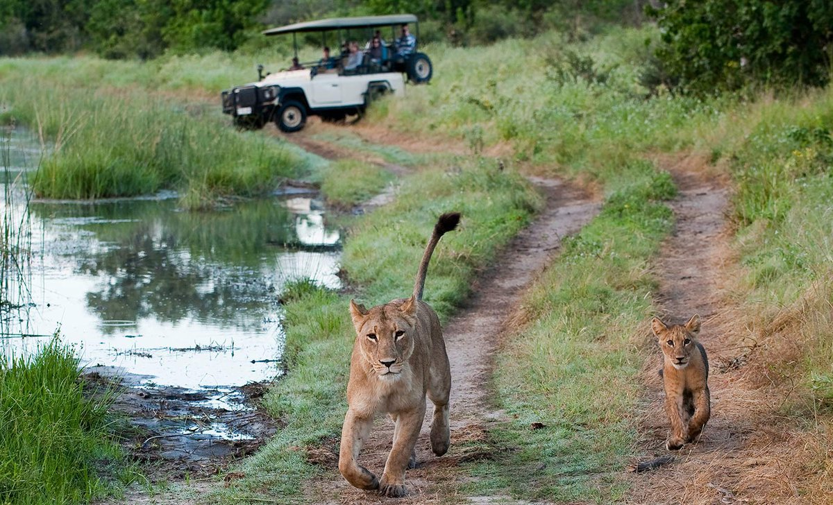 Game drive spotting a lion mother with its cub