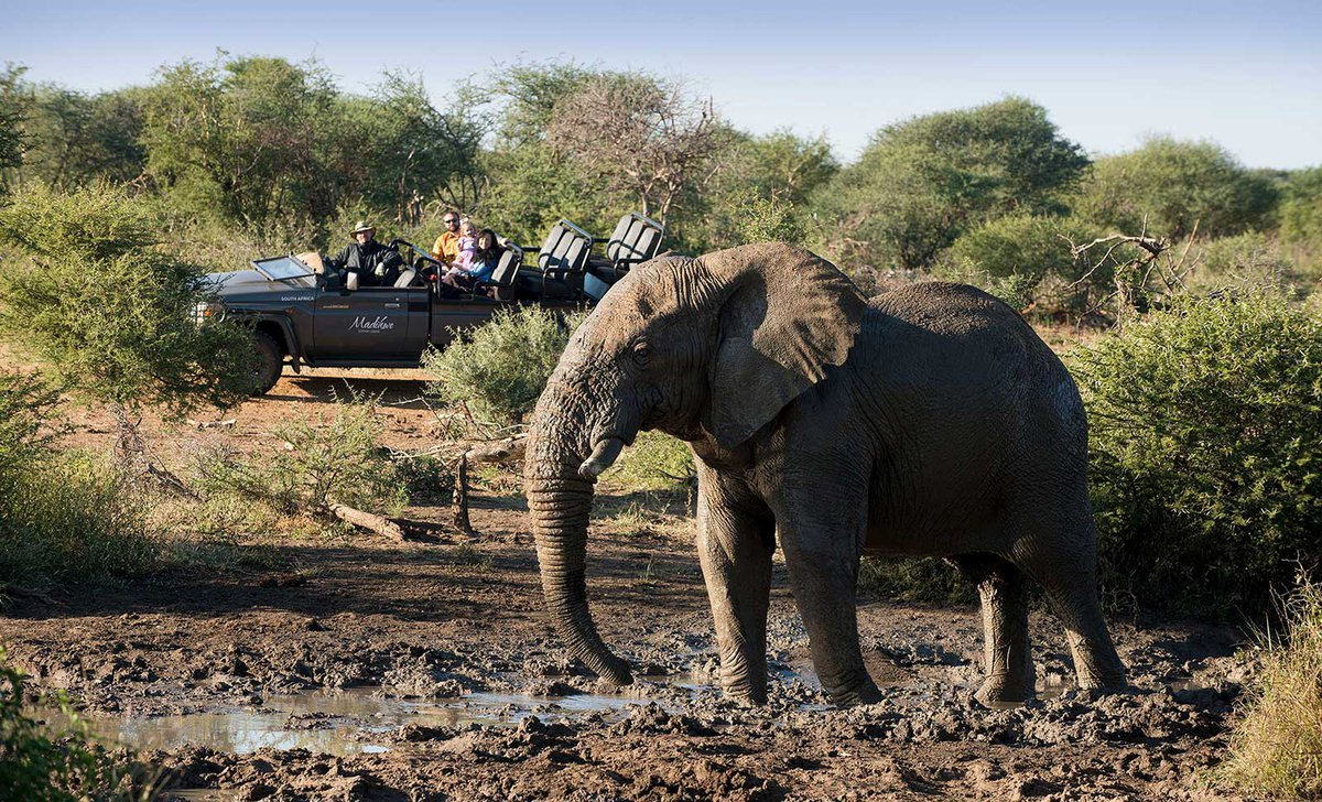 Game drive near elephant in Madikwe