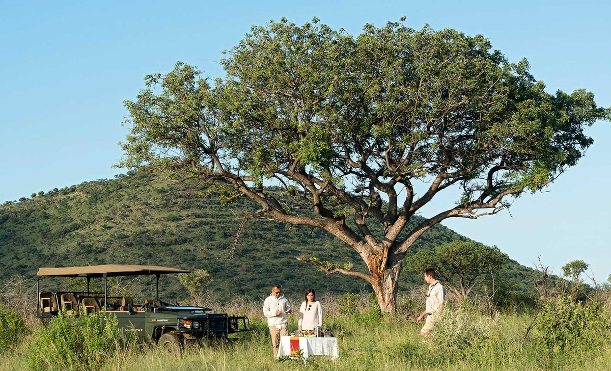 Game drive stop for sundowners under large tree