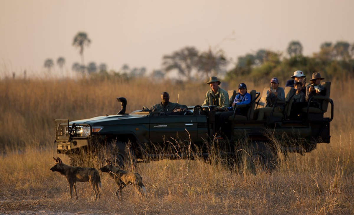 game drive viewing a wild dog pair