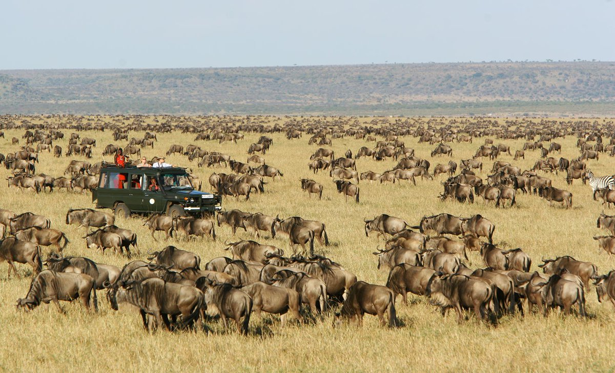 Game drive in Great Migration