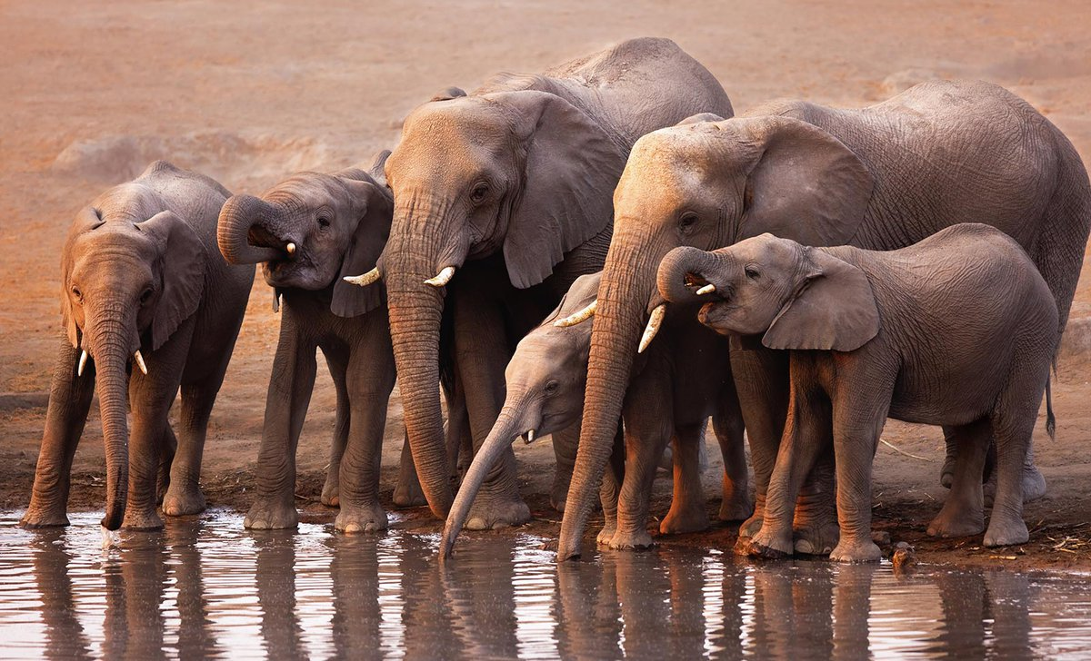 Herd of elephants with babies at Etosha National Park, Namibia, by johan63.
