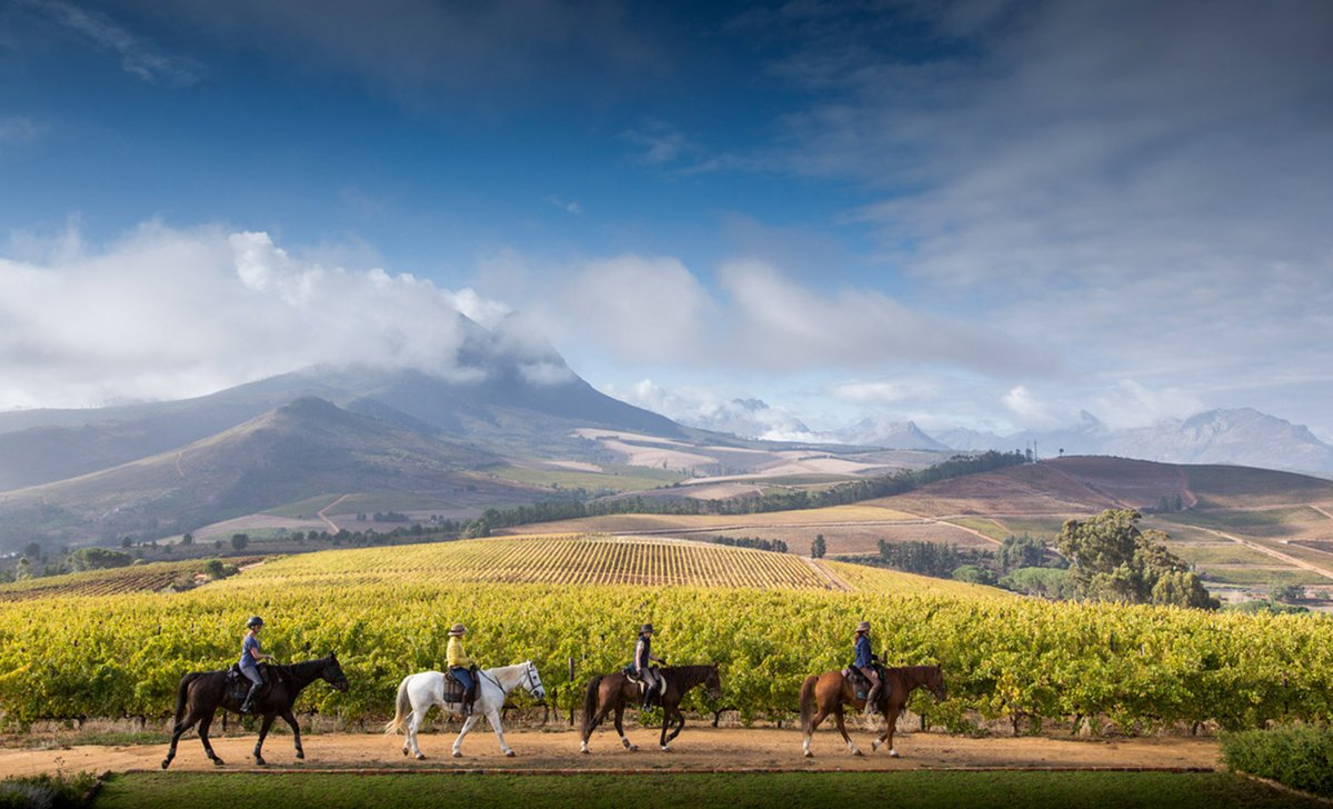 horseback riding in south africa's winelands