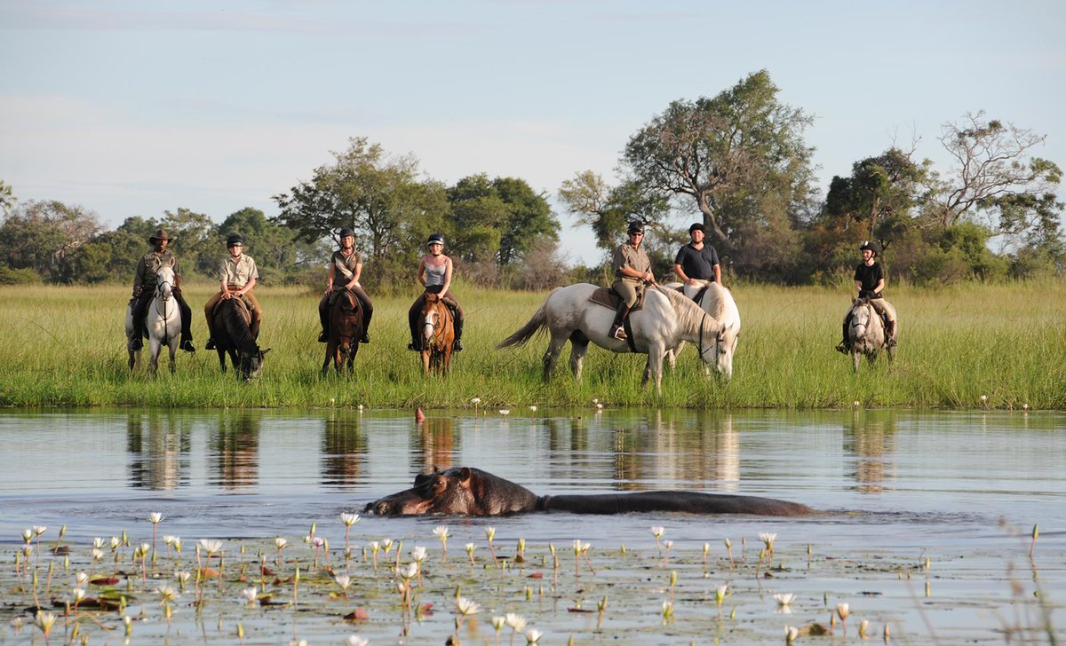 Horse ride in Okavango Delta alongside breaching hippo