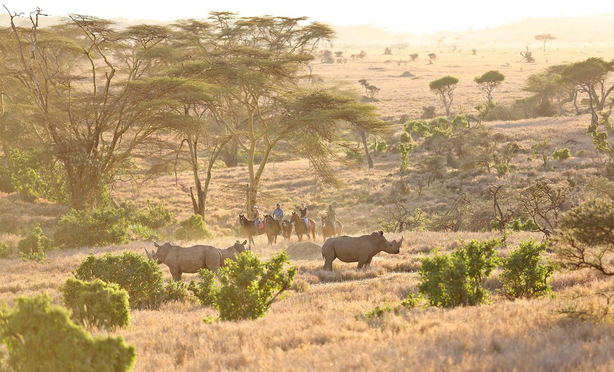 Epic horseback safari ride near rhino in Lewa Conservancy Northern Kenya
