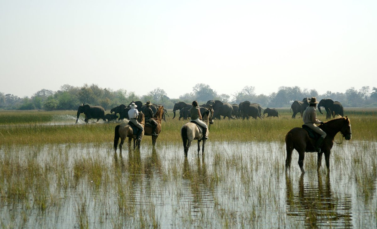 Horse ride in Okavango Delta alongside elephants
