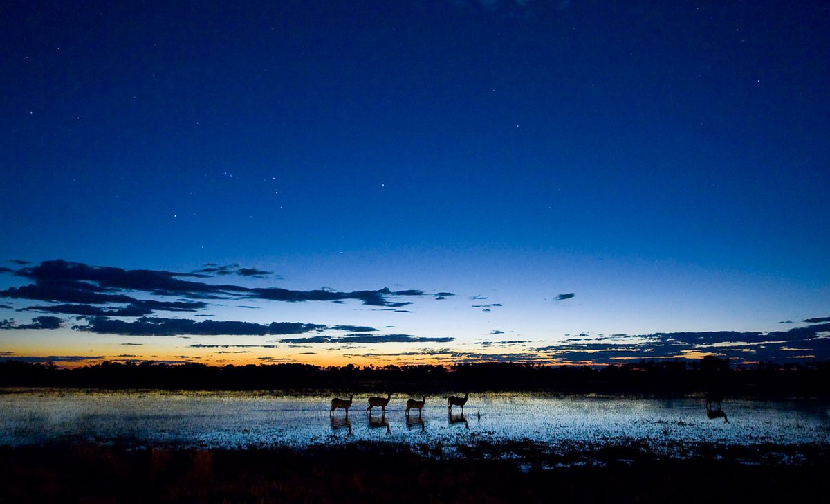 Night-time view over waterhole with imapala