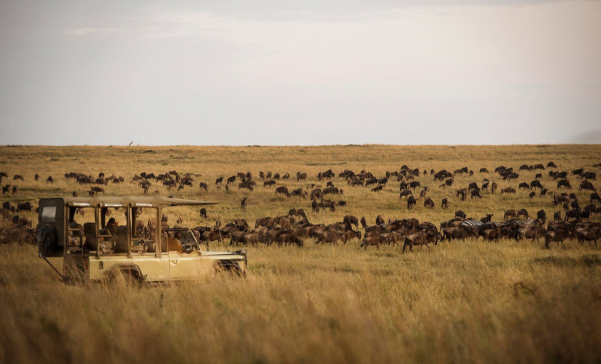 game drive with wildebeest herd on migration