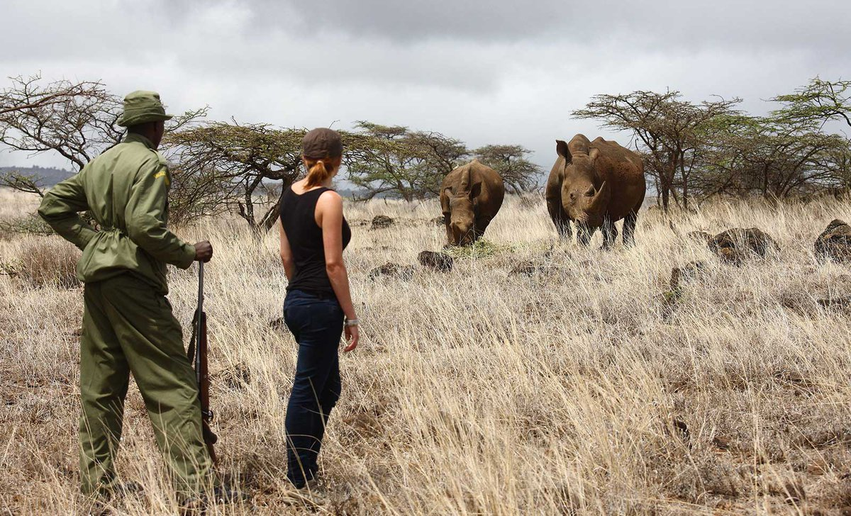 Woman and guide standing near pair of rhinos on conservation tracking excursion