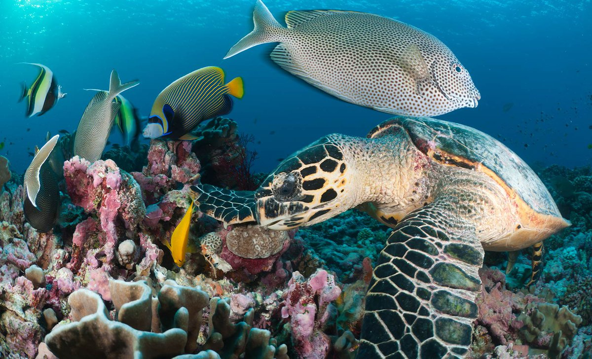 Turtles and fish among coral reef in the Seychelles