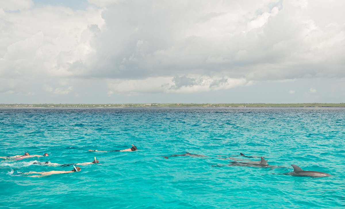 Snorkelling with dolphins at Matemwe Beach House in Zanzibar