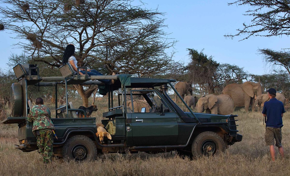 Couple on game drive near elephants in northern Kenya