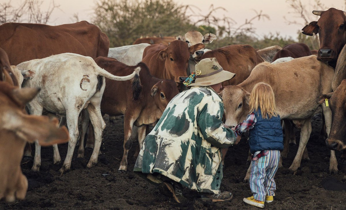 Mother and child meeting cows during Samburu village visit in Laikipia