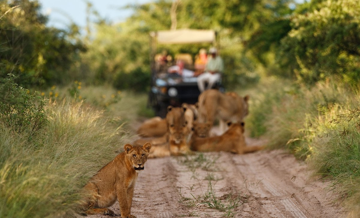 para-3-lion-game-drive-deception-valley-lodge-83098.jpg