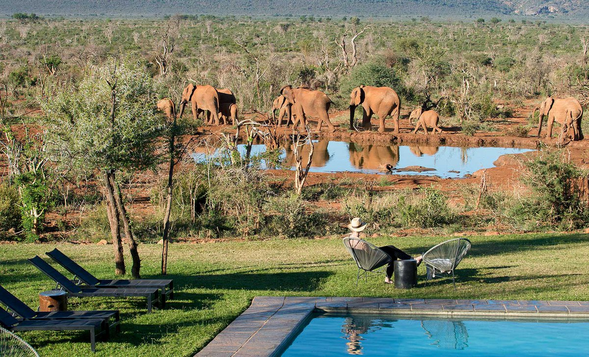 Woman by pool watching elephants nearby at Madikwe Safari Lodge