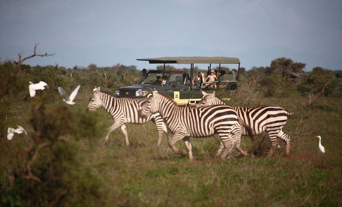 Private family game drive vehicle near zebras at tortilis Camp