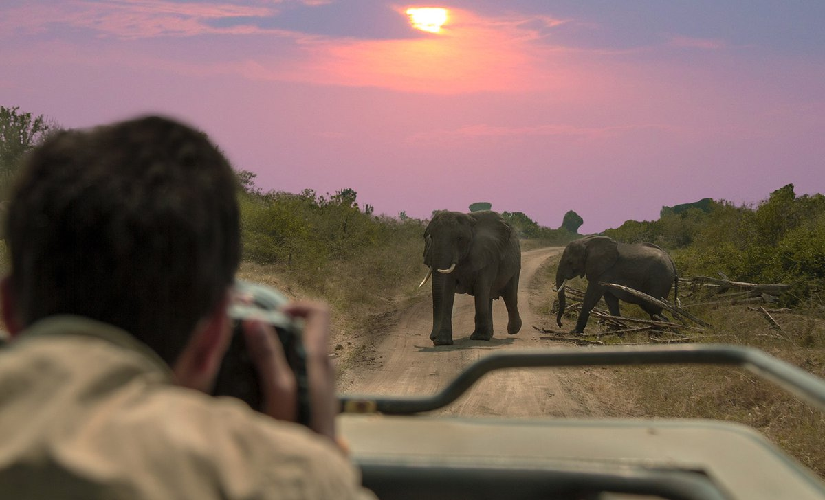 safari-photography-queen-elizabeth-istock-622423540-by-divesh-mistry-42828.jpg