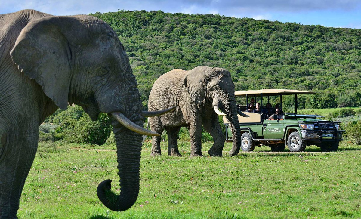 Game drive near elephant on garden route