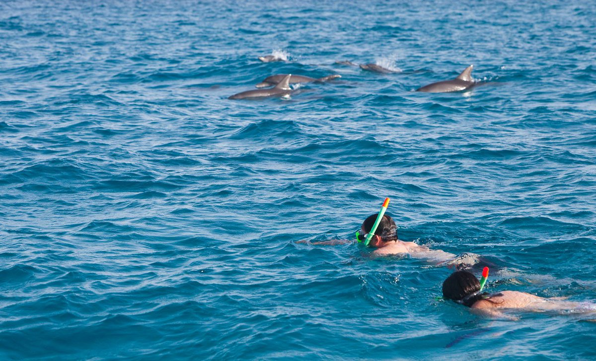 Guests snorkelling with dolphins