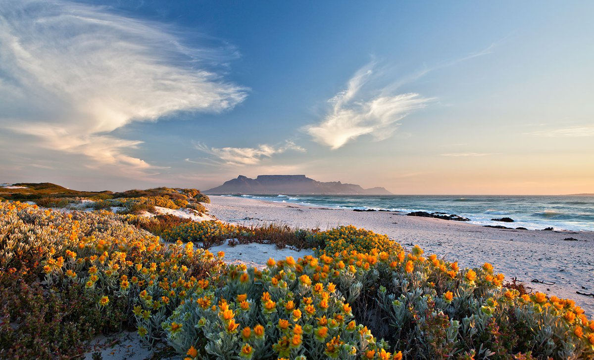 spring-in-south-africa-istock-677399580-by-sculpies-35617.jpg