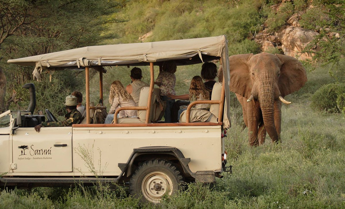 Girls and parents looking at elephant on game drive in Kalama Conservancy