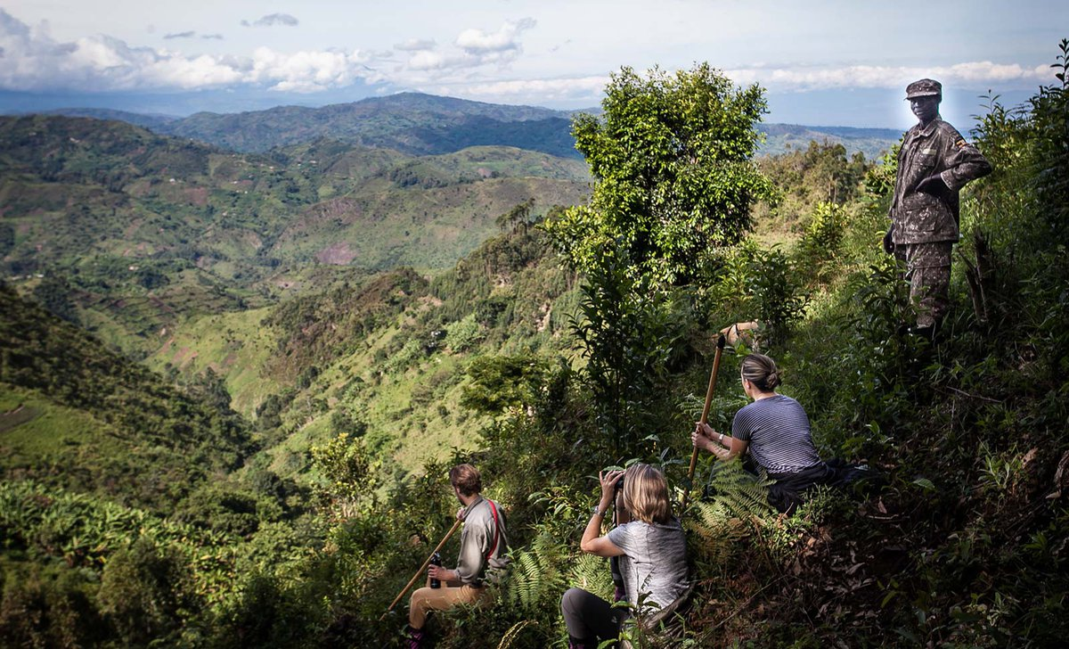 Guests trekking with guide in Bwindi mountains